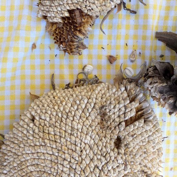 How to Roast Raw Sunflower Seeds | #HealthyKitchenHacks